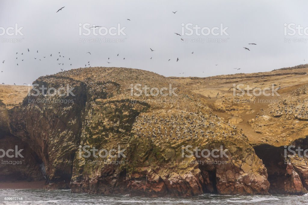 Peru, Paracas, Ballestas Islands. Island with different species of birds. stock photo