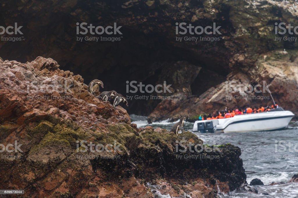 Peru, Paracas, Ballestas Islands. Penguins and touristic boat. stock photo