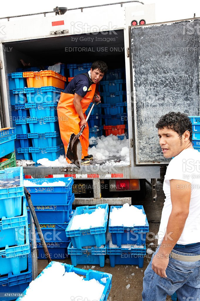 Peruvian man shovelling ice in back of refrigerated fish van stock photo