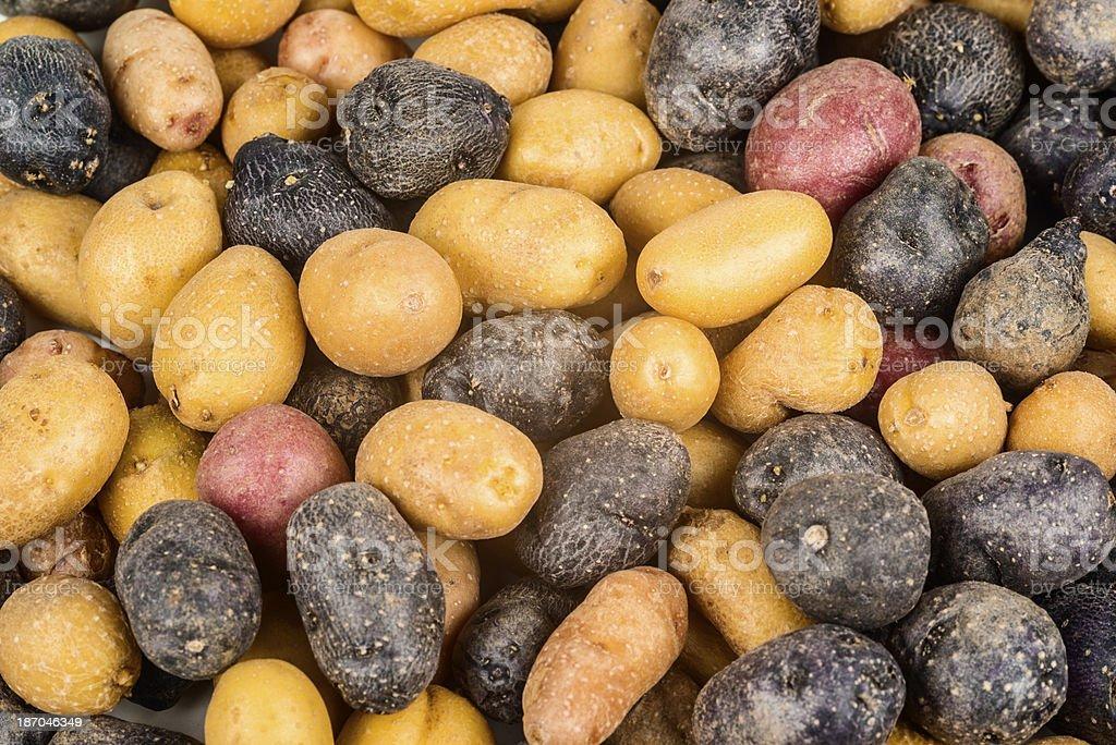 Peruvian potatoes background royalty-free stock photo
