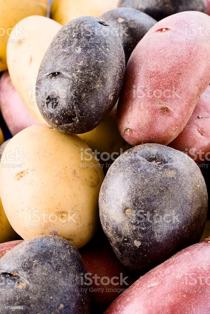 Peruvian Potatoes royalty-free stock photo