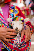 istock Peruvian woman in traditional clothes holding a baby llama 636877762