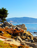 Pescadero Point Monterey California