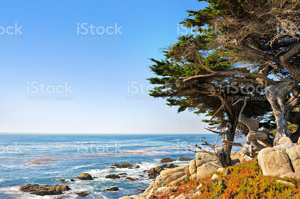 Pescadero Point with Ghost Trees stock photo