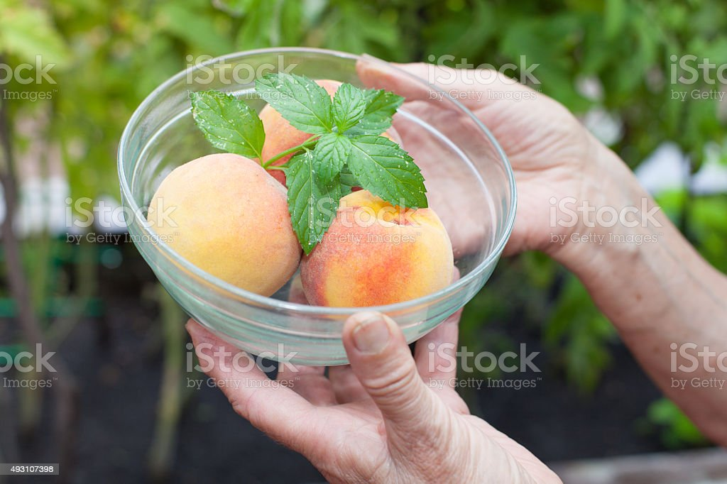 peson holding peaches in glass bowl stock photo