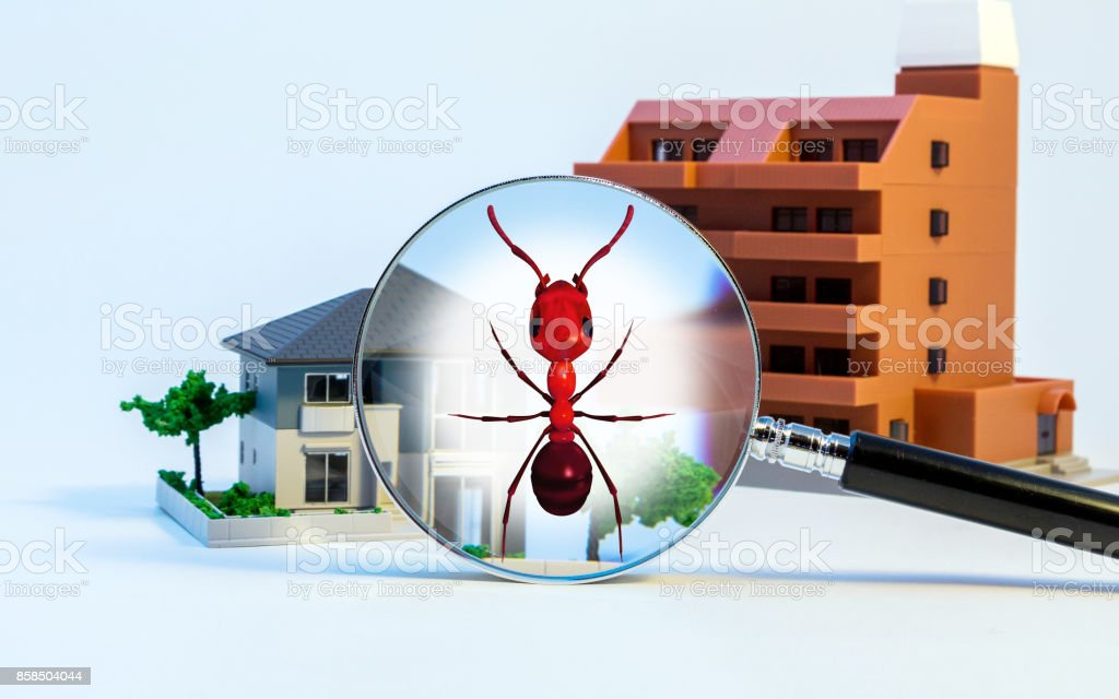 Pest control of residence concept. 3D rendered fire ant. stock photo