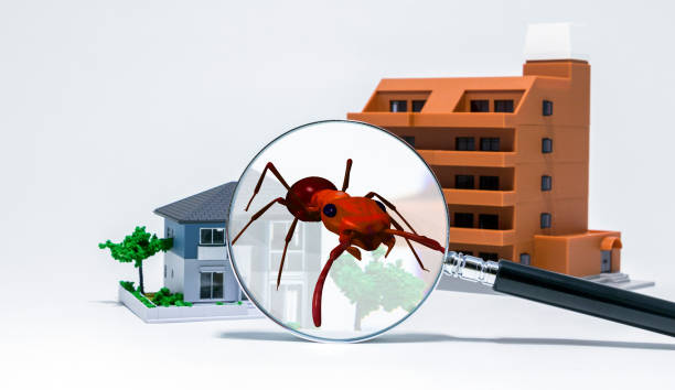Pest control of residence concept. 3D rendered fire ant. Pest control of residence concept. 3D rendered fire ant. isoptera stock pictures, royalty-free photos & images