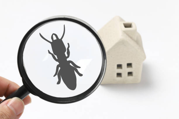 pest control termite exterminate termite stock pictures, royalty-free photos & images