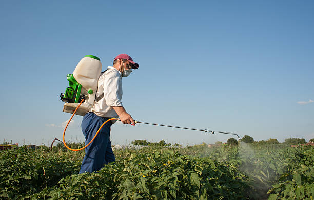 Pest control staff is spraying pesticide on plants Man spraying vegetables in the garden crop sprayer stock pictures, royalty-free photos & images