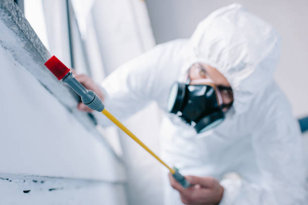 pest control worker spraying pesticides under windowsill at home - attrezzatura per la disinfestazione foto e immagini stock