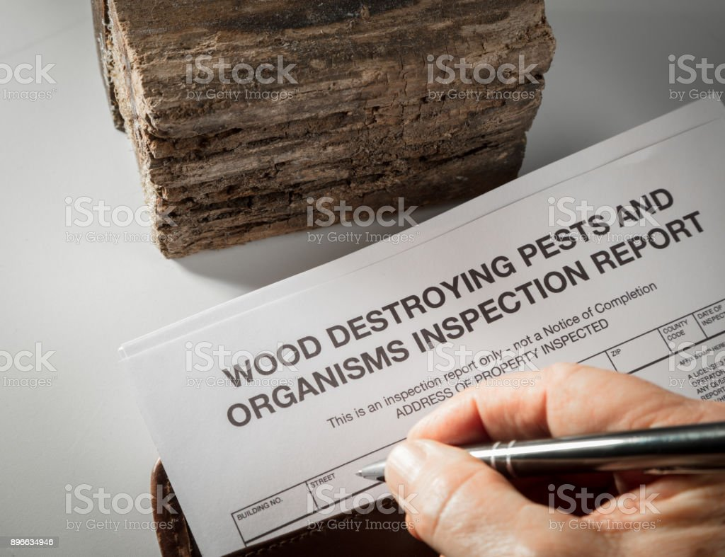 Pest inspection report with wood stock photo