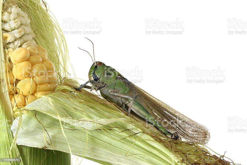 Pest royalty-free stock photo