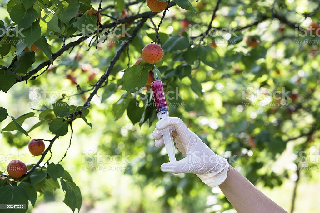 Pesticide injected in a fruit - Royalty-free Agriculture Stock Photo