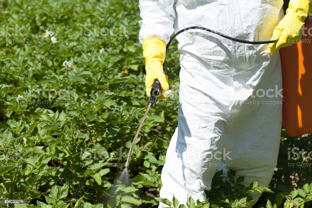 Pesticide spraying. Agricultural pollution. stock photo