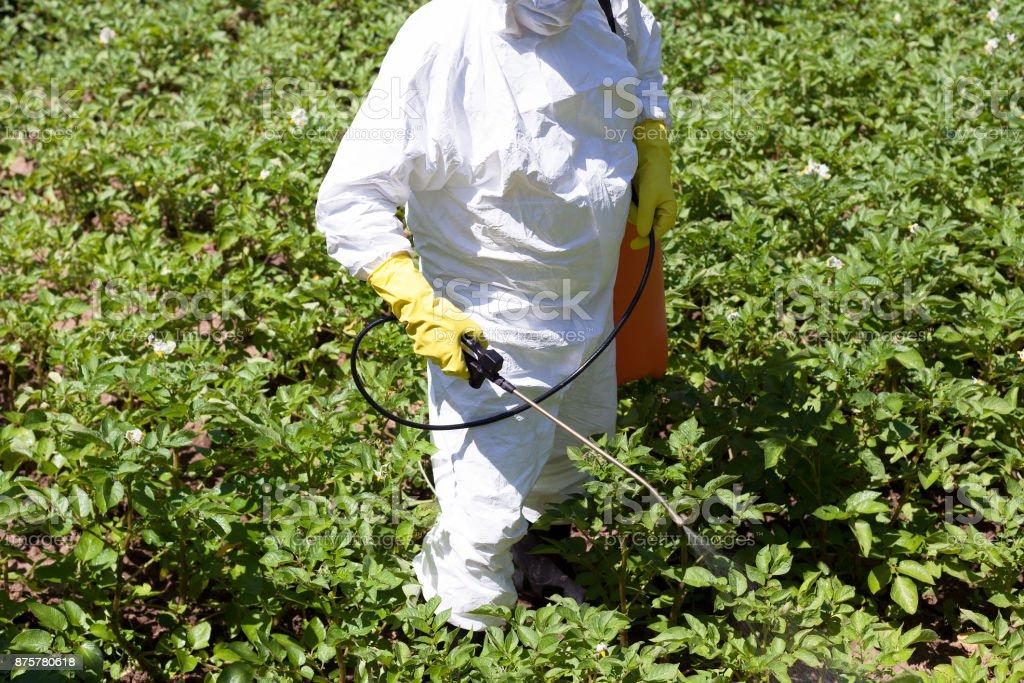 Pulverização de pesticidas. Vegetais não-orgânicos. - foto de acervo