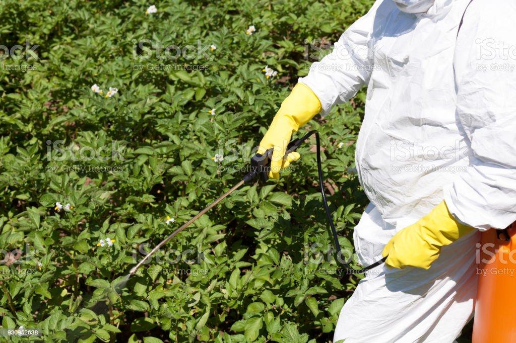 Pesticide spraying. Non-organic vegetables. Pollution. stock photo