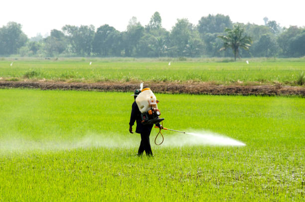 Pesticides from rice Farmers inject insecticides to prevent insects in rice fields. herbicide stock pictures, royalty-free photos & images