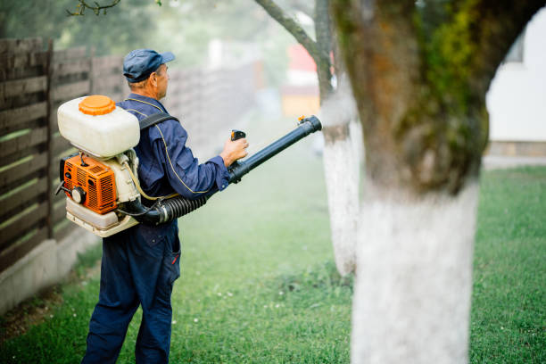 Pesticides spraying. Farmer kills bugs and insects in fruit orchard stock photo