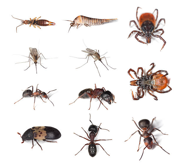 Pests on humans and in human homes​​​ foto