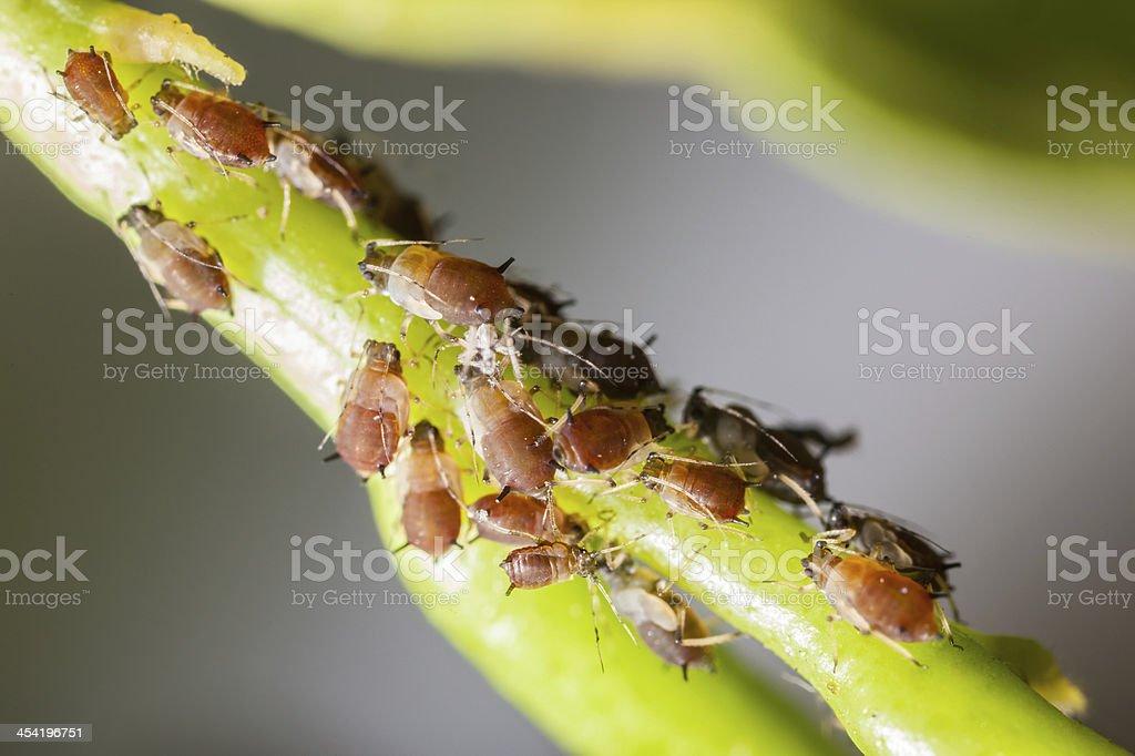 Pests stock photo