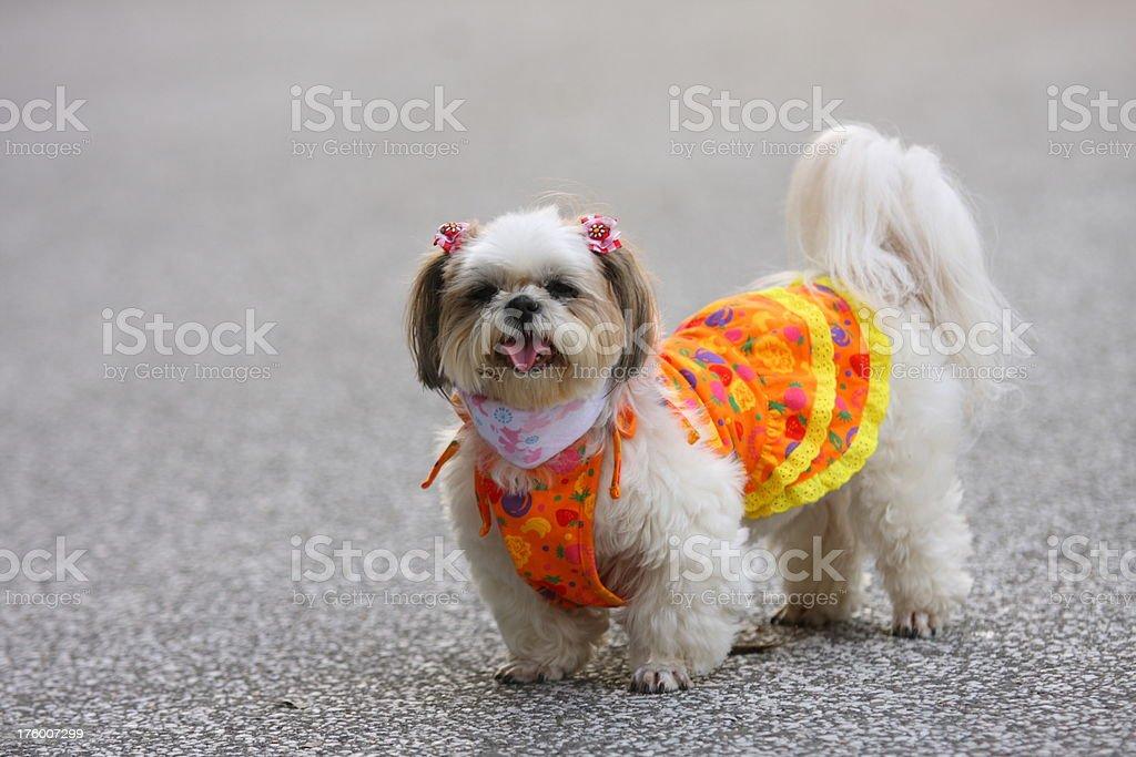 Pet, a dog stock photo