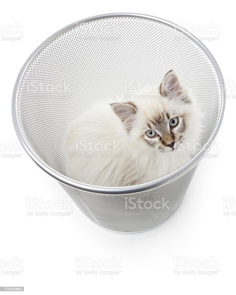 Pet abandonment royalty-free stock photo