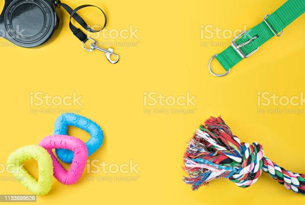 Pet accessories on yellow background picture id1133699526?b=1&k=6&m=1133699526&s=612x612&h=wuygquovx7yptlof jbf3gb z y4t3rtelbcknbs z4=