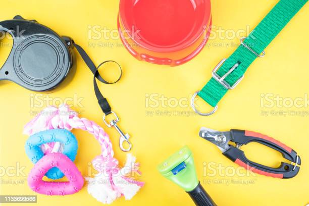 Pet accessories on yellow background picture id1133699566?b=1&k=6&m=1133699566&s=612x612&h=u5s8oyodjnbmfbn7bvineuerful lgooq08s9mex3we=