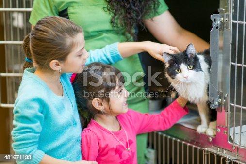 istock Pet Adoption 481671133