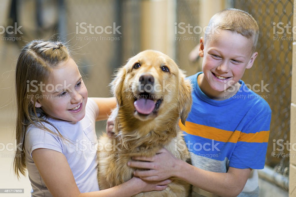 Pet Adoption royalty-free stock photo