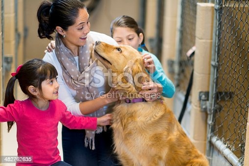 istock Pet Adoption 482762635