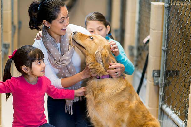 pet adoption - hunde aus dem tierheim stock-fotos und bilder