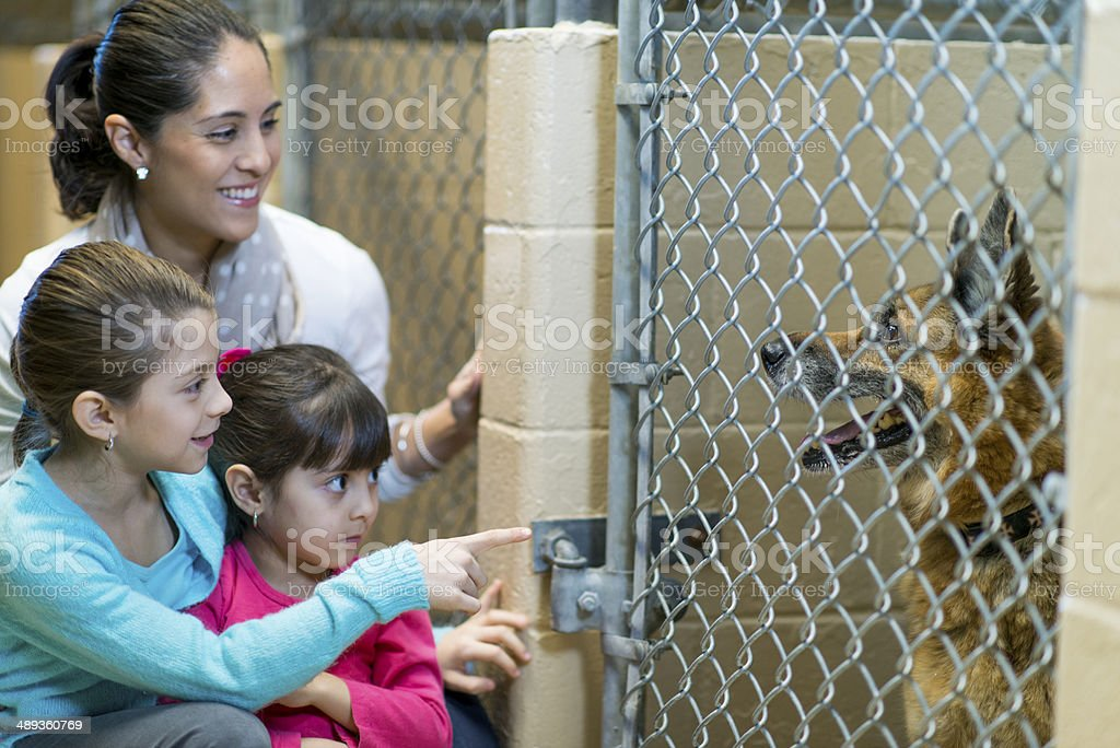 Pet Adoption royalty-free stock photo