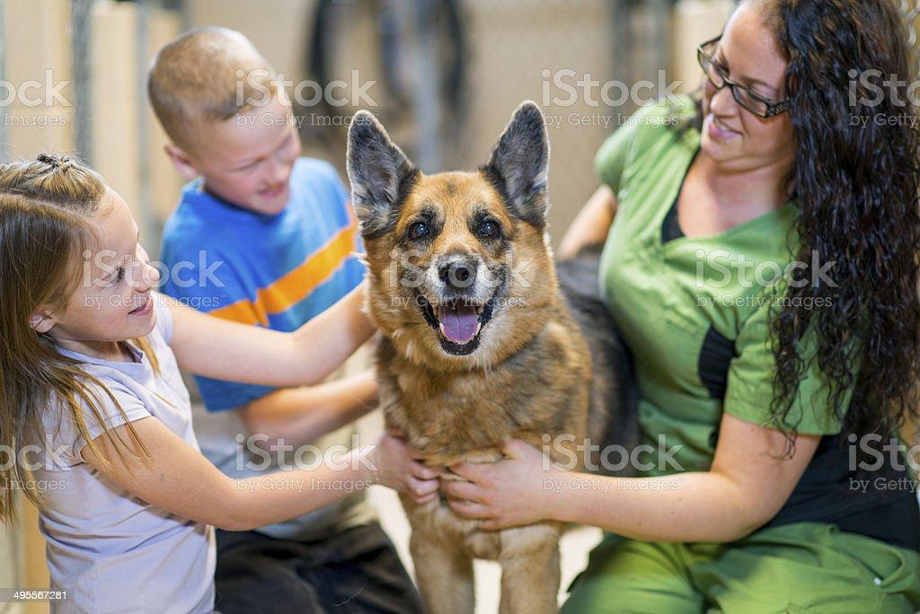 Pet Adoption – Foto
