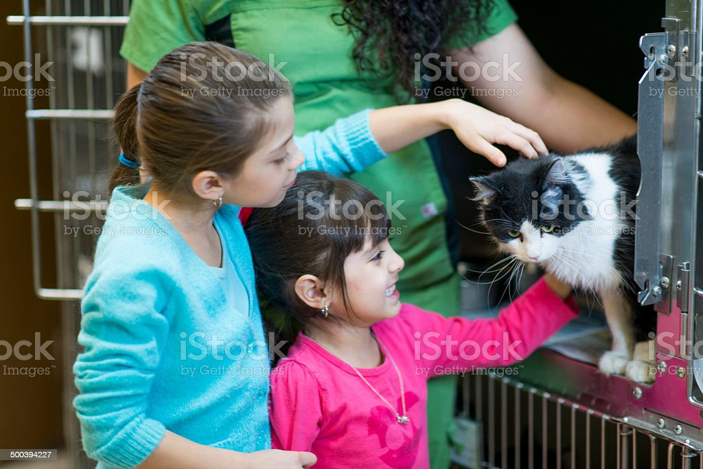Pet Adoption stock photo