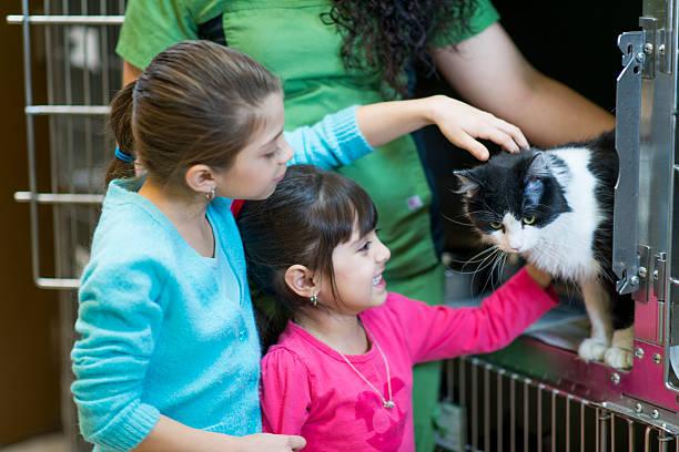 Pet Adoption stock photo