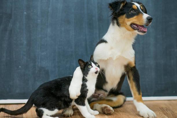 Pet adoption picture id640144660?b=1&k=6&m=640144660&s=612x612&w=0&h=fthzwomgtoe5 hwq05ppmbzjbtc p2tq9fbjytus3qc=