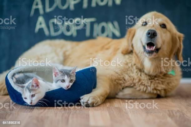 Pet adoption picture id641895316?b=1&k=6&m=641895316&s=612x612&h=jokis4wg4al6tjxhi5q24konne0ci7pvch0xqi56jsm=