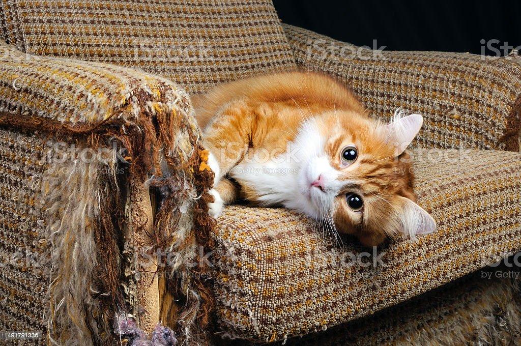 Pet y muebles - foto de stock