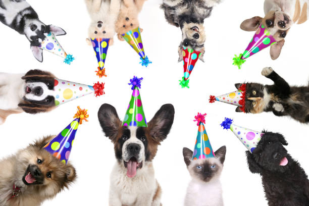 Pet animals isolated wearing birthday hats for a party picture id675488812?b=1&k=6&m=675488812&s=612x612&w=0&h=ifjrrbnhzkp0wmzabnheynfb5wnsyl3lkuj2xng2 dy=