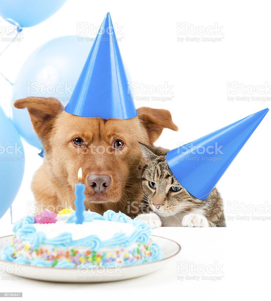 Brilliant Pet Birthday Party Stock Photo Download Image Now Istock Funny Birthday Cards Online Necthendildamsfinfo