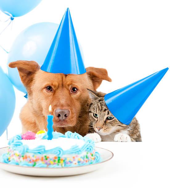 Pet birthday party picture id92130441?b=1&k=6&m=92130441&s=612x612&w=0&h=8gpyz1ee1mdqoqx9qjpfry2pjzw4nwfljue0ocb9zua=