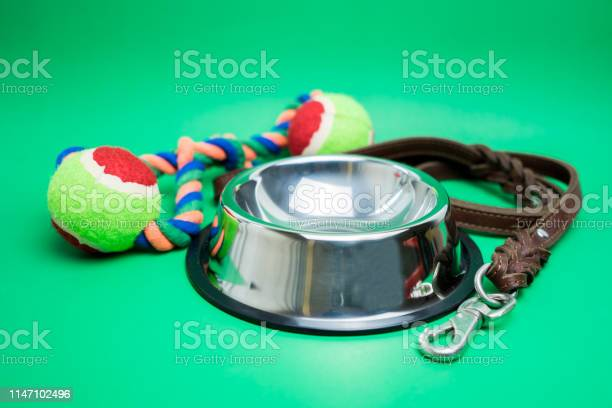 Pet bowl stainless with toy on green background picture id1147102496?b=1&k=6&m=1147102496&s=612x612&h=nu1k ruobgpzfphau40mredz3ri 90so2gko x z0ra=