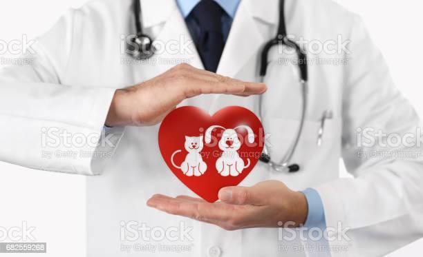 Pet care concept veterinarian hands with animal and heart icons vet picture id682559268?b=1&k=6&m=682559268&s=612x612&h=vkexruliqaxuacoohako3c91iklljvmo9 kehv1ewri=
