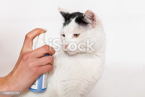 Pet care, flea and tick spray treatment. Black and white cat with yellow eyes on a white background.