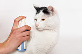 istock Pet care, flea and tick spray treatment. 1209252751