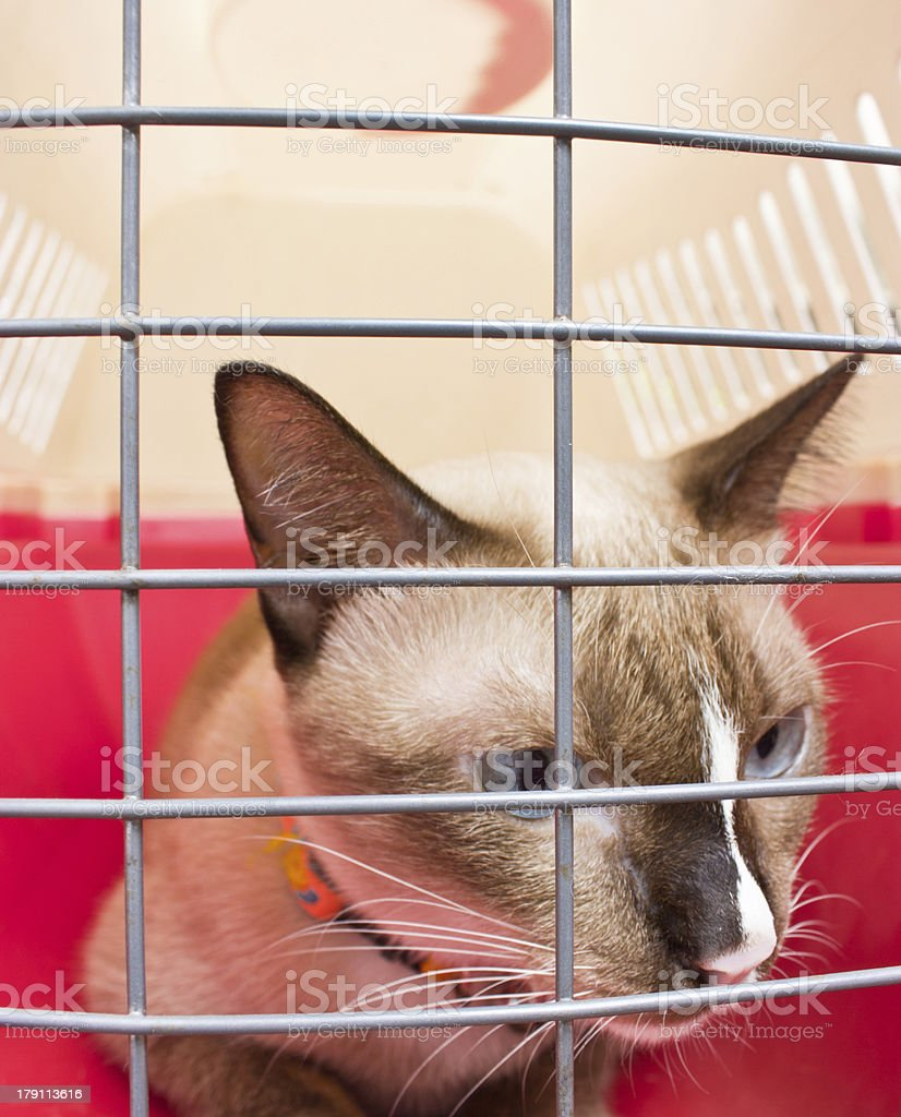Pet carrier with cat inside. royalty-free stock photo
