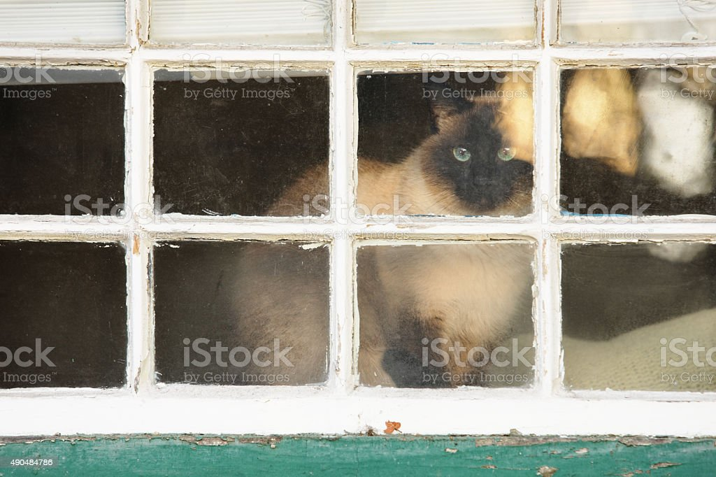 Pet Cat Inside Window stock photo