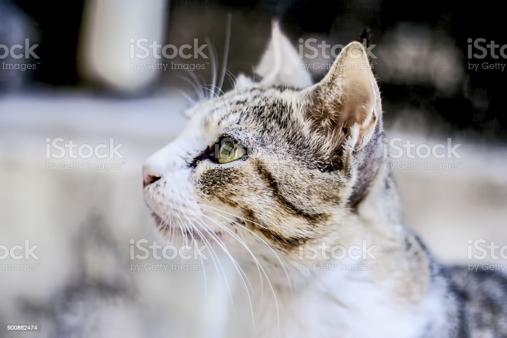 A pet  cat looking for food. stock photo