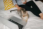 飼い主と一緒にテレビを見てベッドでリラックスしているペットの猫